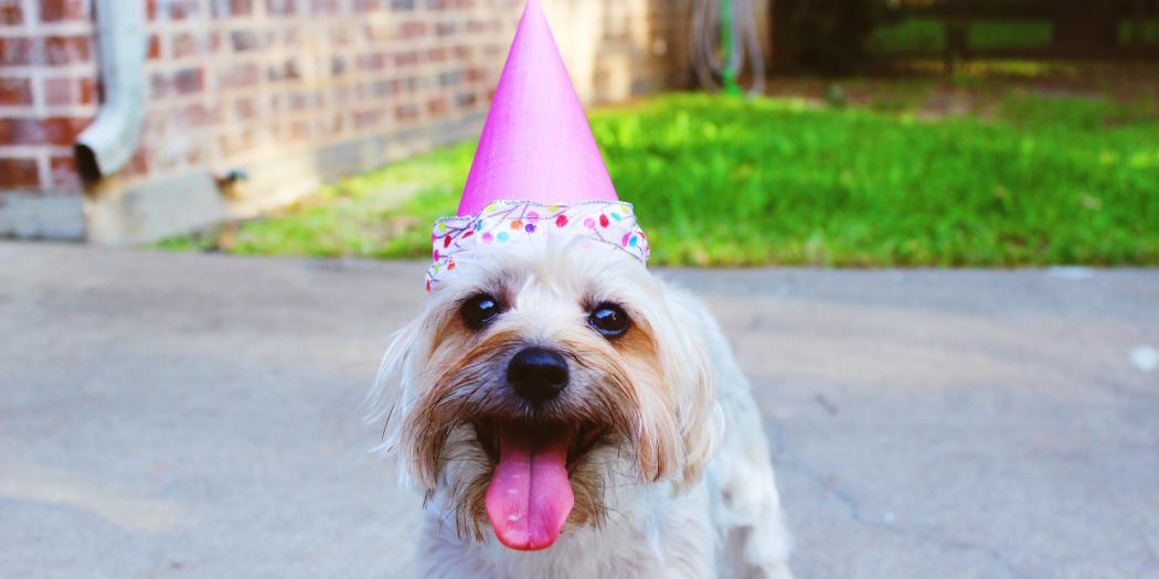 Celebrating